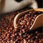 A Roasting Lab 5x50 gr Seçkin Kahveler Deneme Paketi