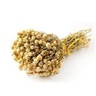 Selçuk Baharat 500 gr Üzerlik Otu