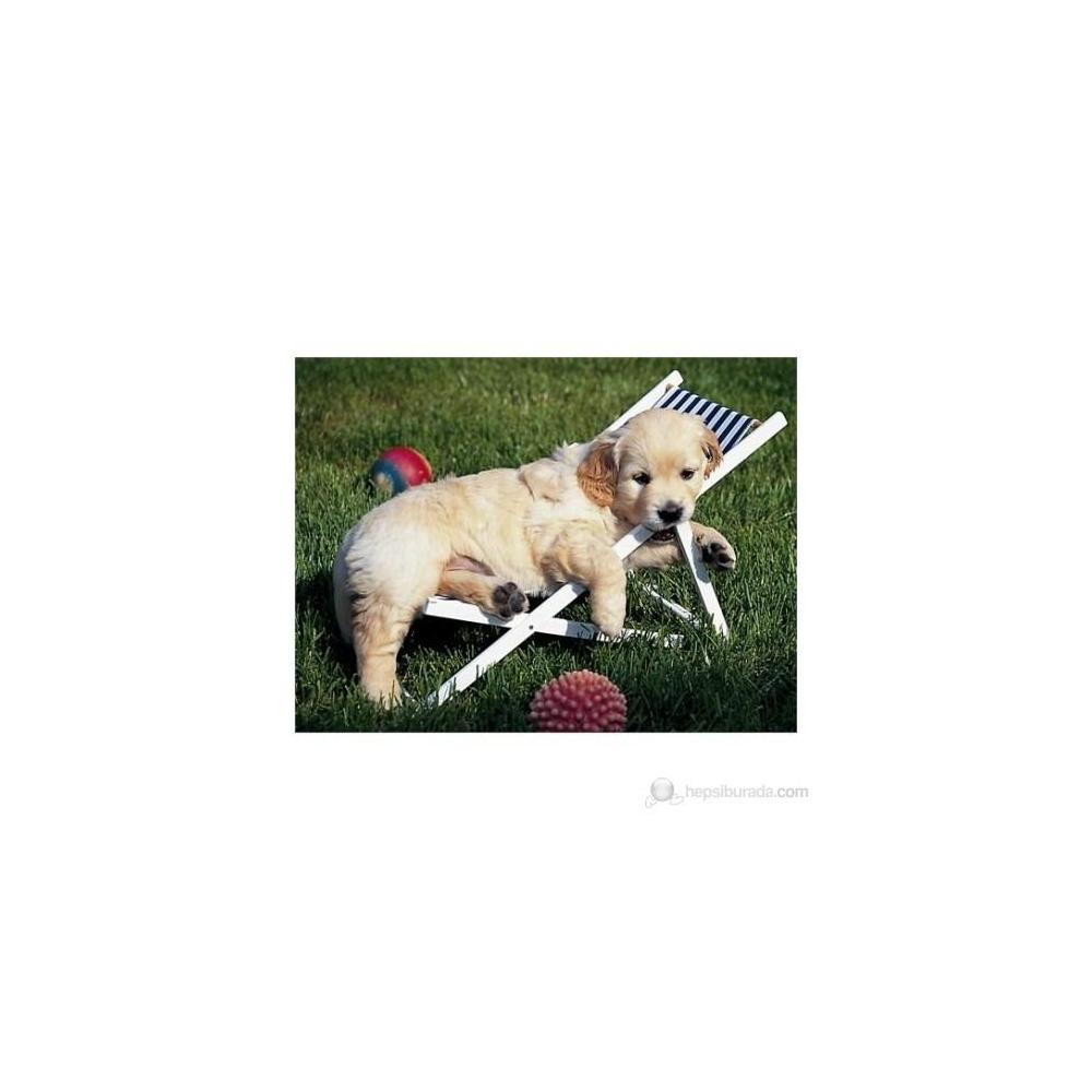 Ravensburger Golden Retriever 500 Parça Puzzle