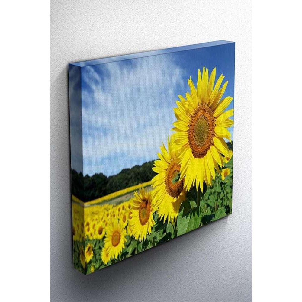 Tabloshop Sunflowers Kanvas Tablo